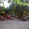 vafios-traditional-taverna-lesvos-7
